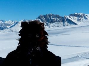 Loup des montagnes 72
