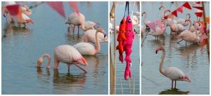 flamingo!!!