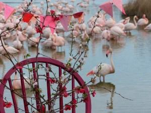 Pont de Gau , Rose 192 72