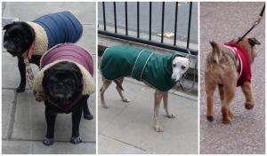 chiens londoniens